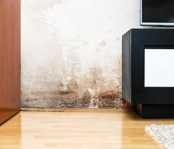 Mold Remediation Ten Things You Should Know About Mold Damage In Your Providence Home